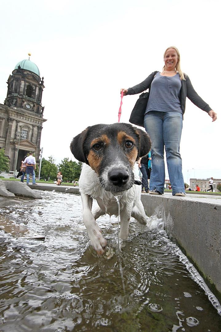 dog, Berlin, Berliner Dom, summer, fountain, mitte