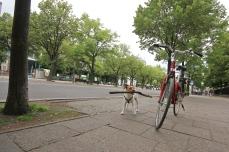 dog, dogs, dog owners, berlin, metropolis