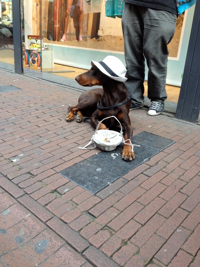 Dog, style, hat, street style, Berlin