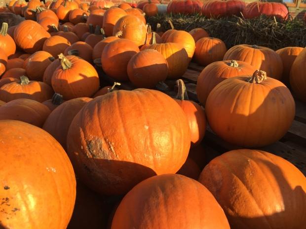 Berlin, Brandenburg, nature, pumpkins,